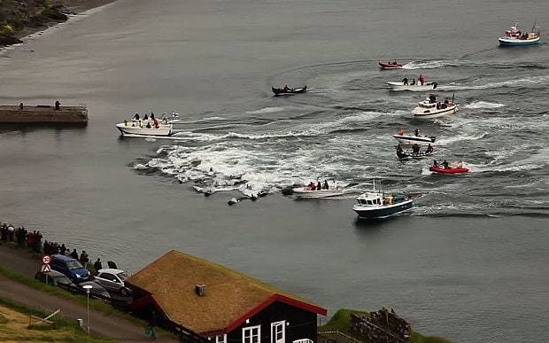 Horrific images show slaughter of 250 whales in Faroe Islands hunt