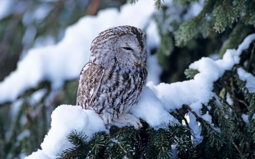 Garden wildlife in winter: in pics - Telegraph