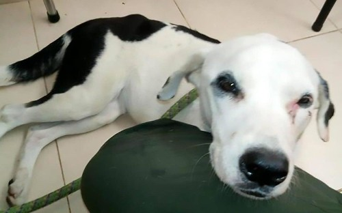 Dog 'dies of a broken heart' after being dumped at airport by her owner
