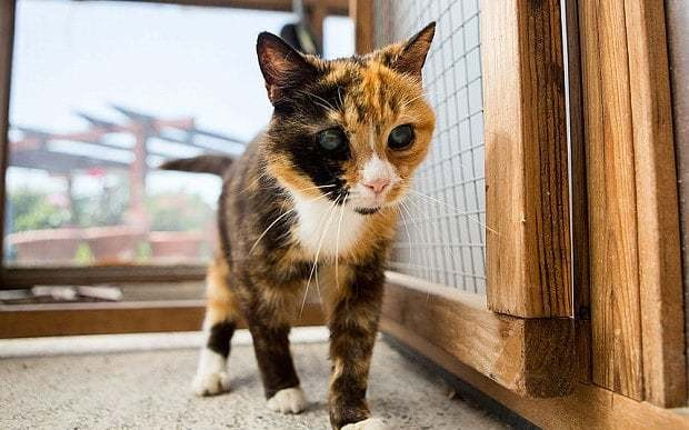 Meet Pops, Britain's oldest rescue cat always overlooked because of 'terrifying' eyes