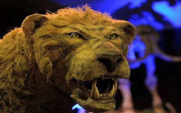 Scientists reveal hopes of cloning extinct Siberian cave lion