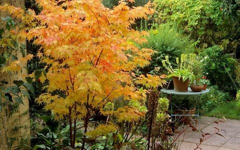 Plant these fiery trees 