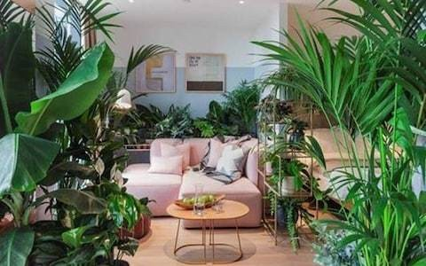 Are millennials at risk of killing the houseplant obsession they created?