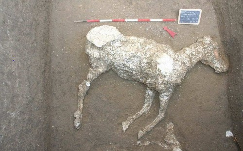 Remains of ancient Roman horse found at Pompeii in dig started by tomb raiders