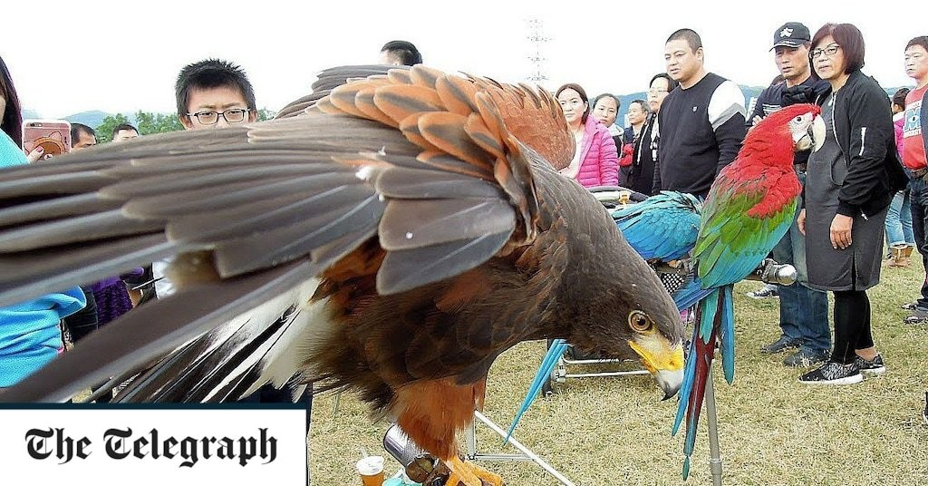 Leak reveals UK partner severed Taiwan bird society over 'secession' fears
