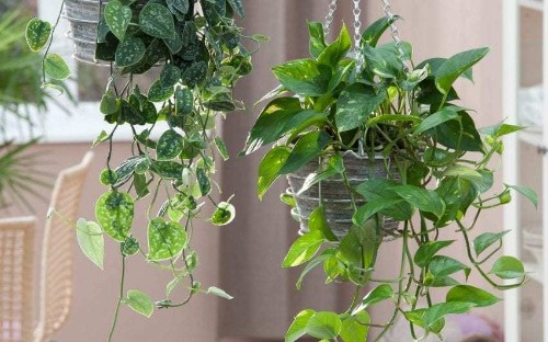 Why houseplants have the answer to pollution in the home