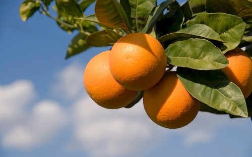 Prices of oranges, flour and coffee jump amid panic-buying