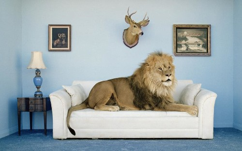 How to decorate your home like a natural history museum