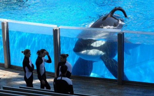 Scientists are building a sanctuary where SeaWorld's orcas could retire
