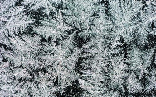 Beautiful winter frost patterns