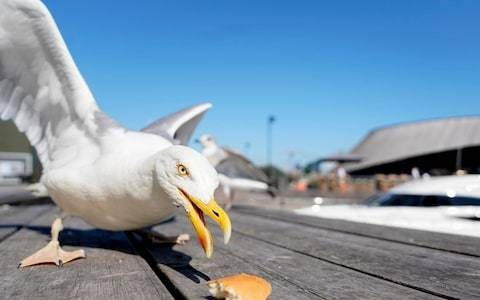 Don't demonise seagulls, they're lovely birds (apart from a few bad eggs)