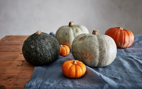 Frightfully good pumpkin recipes: what to do with leftover Halloween gourds