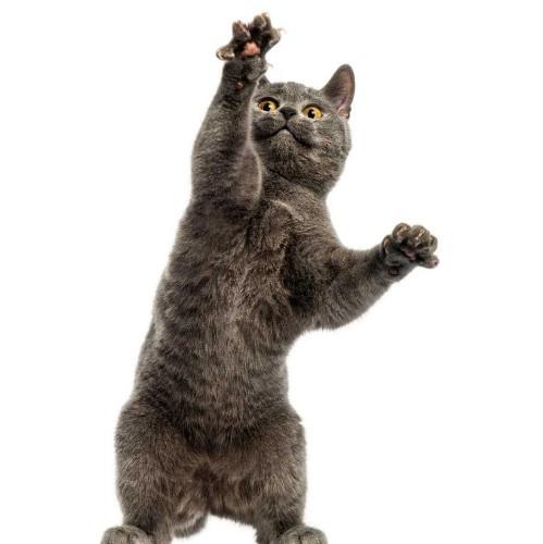 Should you put your cat under house arrest?
