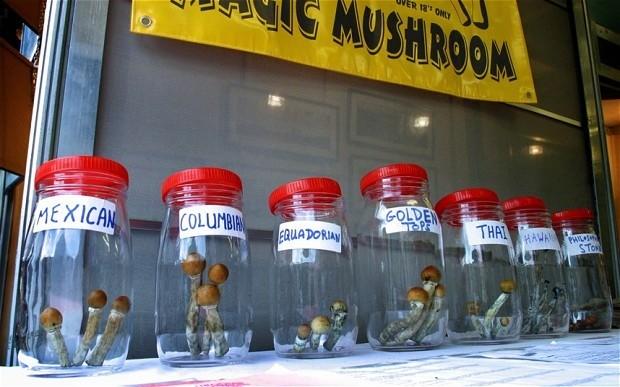 Mushrooms - Magazine cover