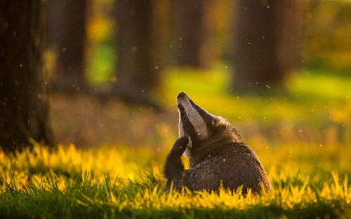 The British Wildlife Photography Awards 2017, in pictures