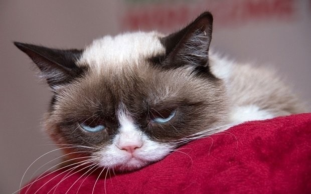Feeling sad and tired? Watch Grumpy Cat, say scientists