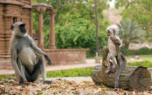 BBC robot animals to go undercover to film nature even David Attenborough cannot reach
