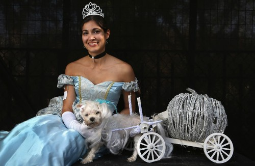 Pet dogs (and a rabbit) dressed up in Halloween costumes