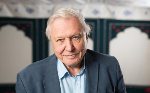 David Attenborough: BBC must stop blaming low ratings for not covering the arts properly