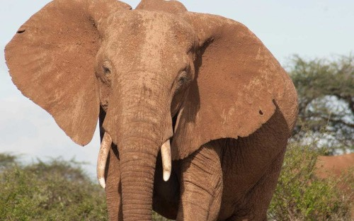 Nature's Epic Journeys shows an elephant society more civilised than ours - review