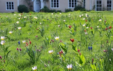How to grow the best bulbs for spring