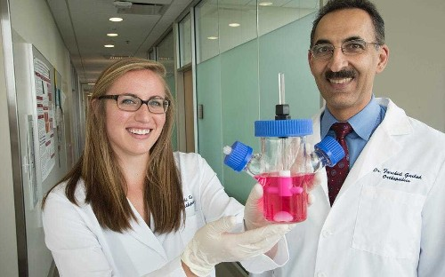 'Living hip' grown in lab genetically engineered to stop arthritis