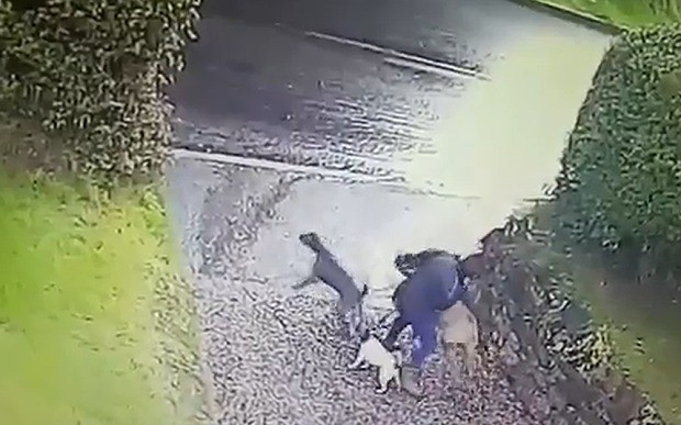 Funny video shows pet dogs drag owner off during walk