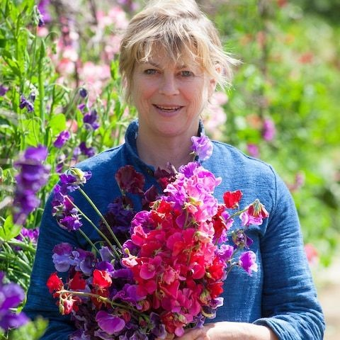 The best sweet peas for cutting
