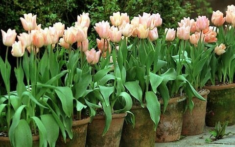 How to plant bulbs in pots - a beginner's guide