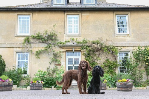 Top Dog-Friendly UK Hotel Deals