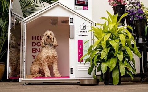 American dog owners checking their dogs into luxury 'canine capsule hotels' while shopping and drinking