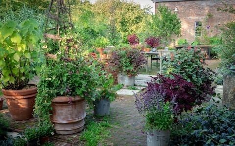The best new plants for summer pots, tested by expert Sarah Raven