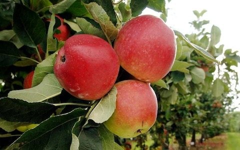 Best apples to grow in your garden