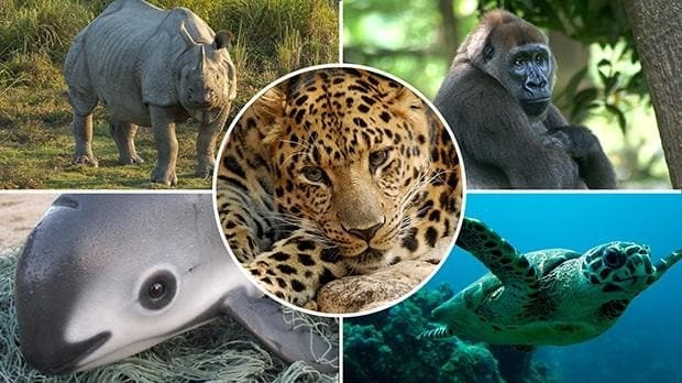 World facing biggest mass extinction since dinosaurs - with two thirds of animals wiped out in 50 years