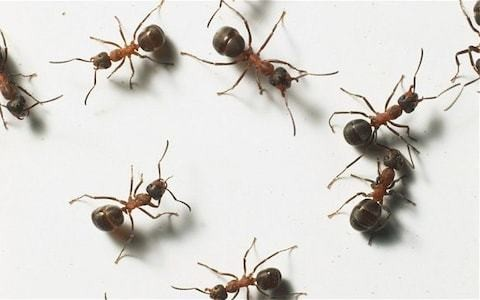 Eating ants could protect against cancer, study finds