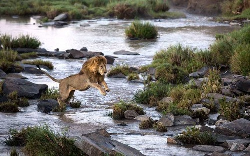 The wonderful wildlife of Kenya's Maasai Mara, in pictures