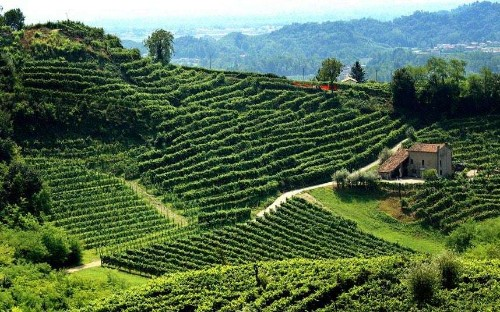 Prosecco: A toast to Italy's finest fizz