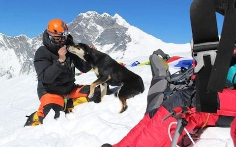 Stray dog becomes first to conquer Himalayan summit after tagging along with climbing expedition