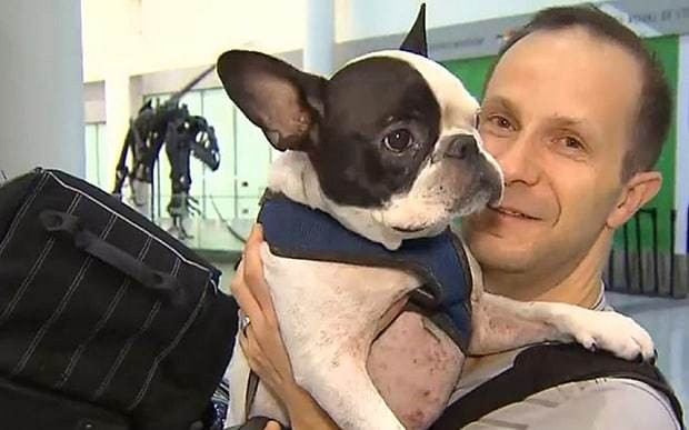 Pilot diverts flight to save life of a French Bulldog