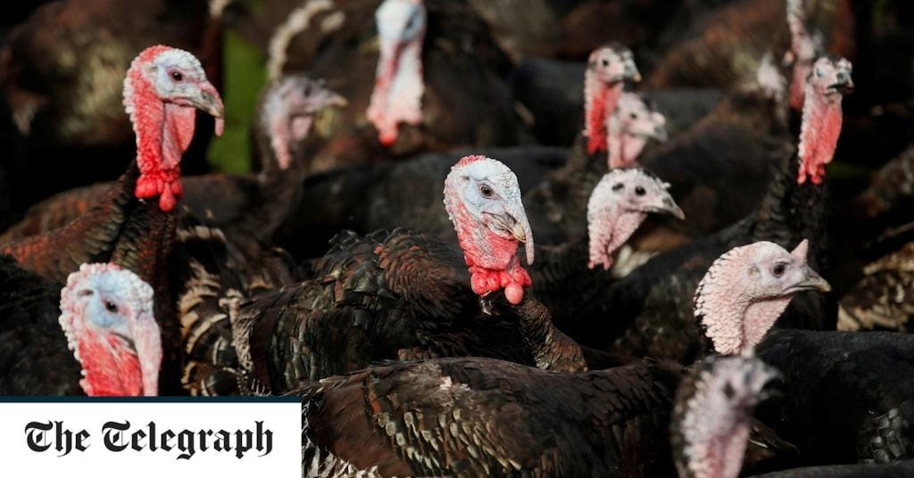 Over 10,000 turkeys culled at North Yorkshire farm after bird flu outbreak