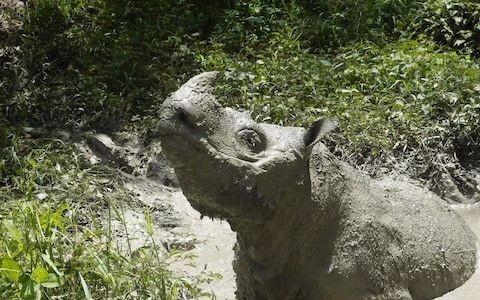 Tam, Malaysia's last male Sumatran rhino, dies