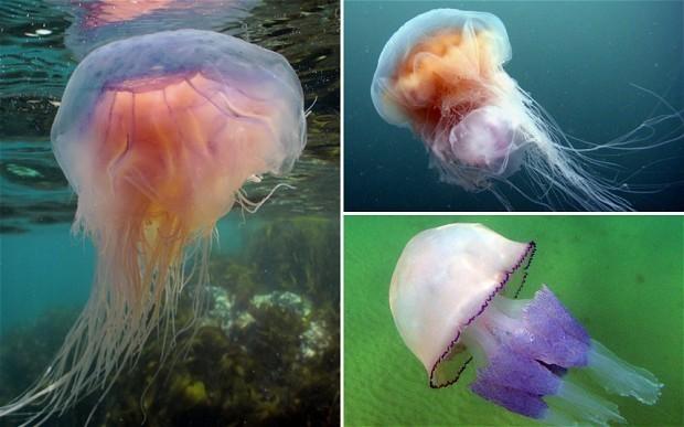 Warm weather sparks jellyfish invasion