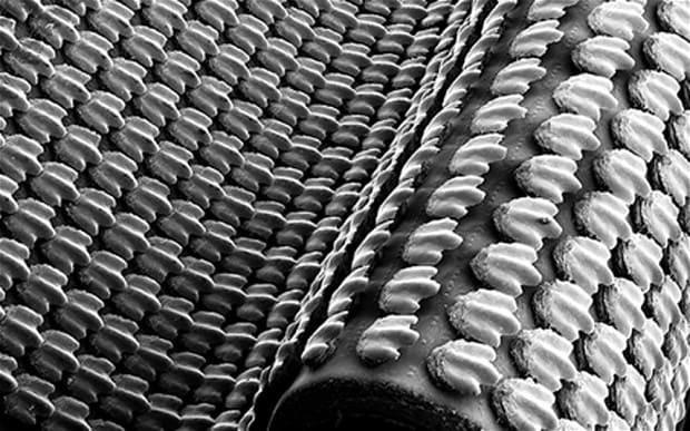 Scientists 3D-print shark skin to boost swimming