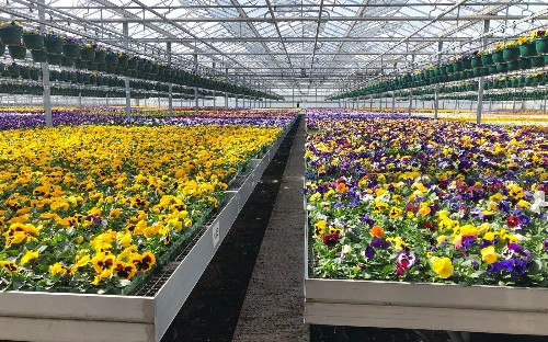 Garden centres should reopen to save 500 million plants now left to rot, says industry body