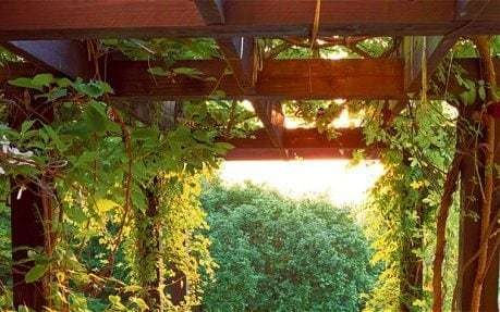 21 steps to an amazing garden for beginners