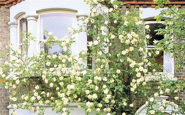 Social climbers: How to cover a house in plants