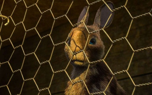 Watership Down, BBC One, review: jerky rabbits, toned-down violence, but acres of emotional bite