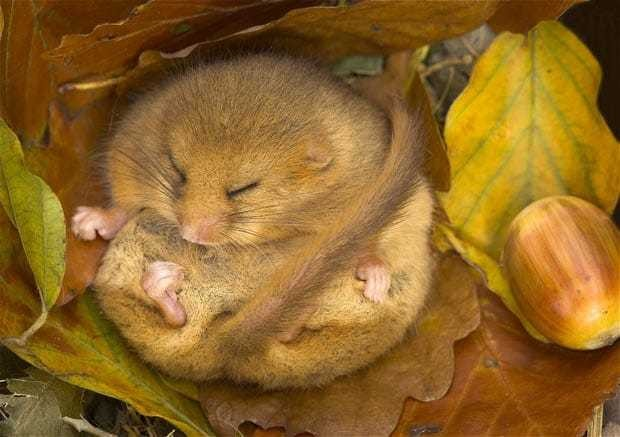 How hibernating animals could help fight Alzheimer's disease