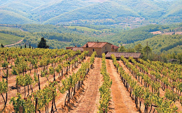How wild boars are causing chaos in Tuscany's vineyards
