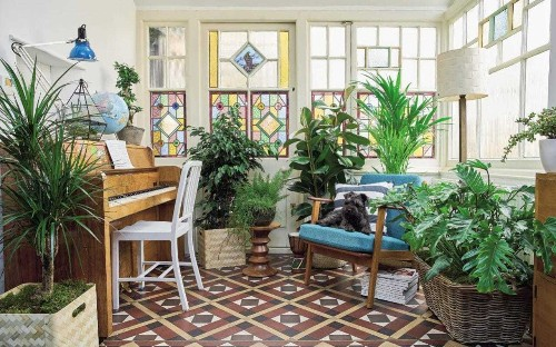 Houseplants: why every home is better off with these multi-tasking pollution-busters